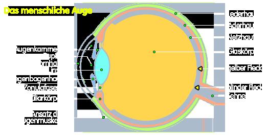 PNG Teile des menschlichen Auges