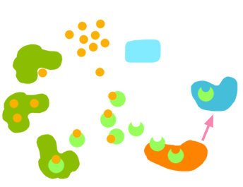 PNG spezifische Immunantwort