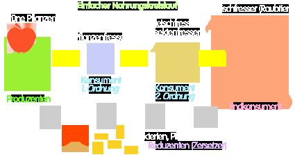 PNG Einfache Nahrungskette mit Reduzenten (Nahrungskreislauf)
