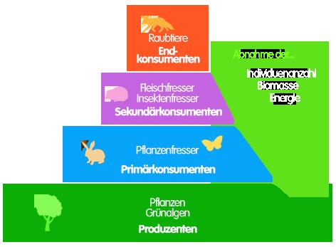 PNG Nahrungspyramide im Ökosystem