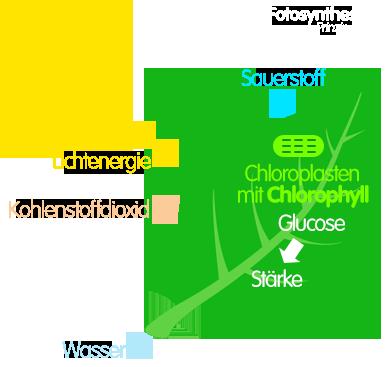 PNG Prinzip der Fotosynthese